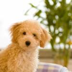 ペット可能なマンションの売却について